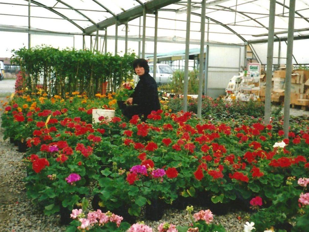 Vendita diretta piante garden la primula piacenza for Piante vendita